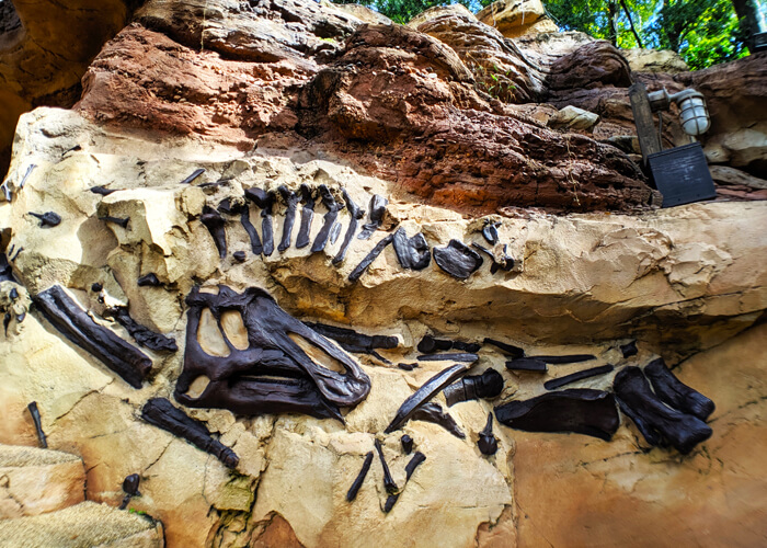 Boneyard bones