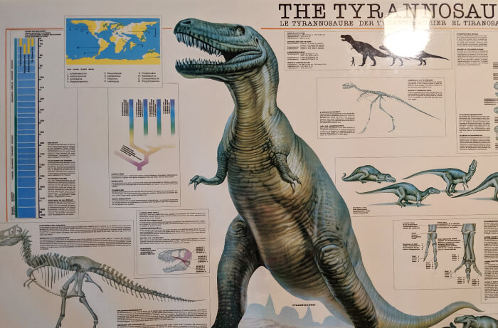 Dinoland USA t-rex