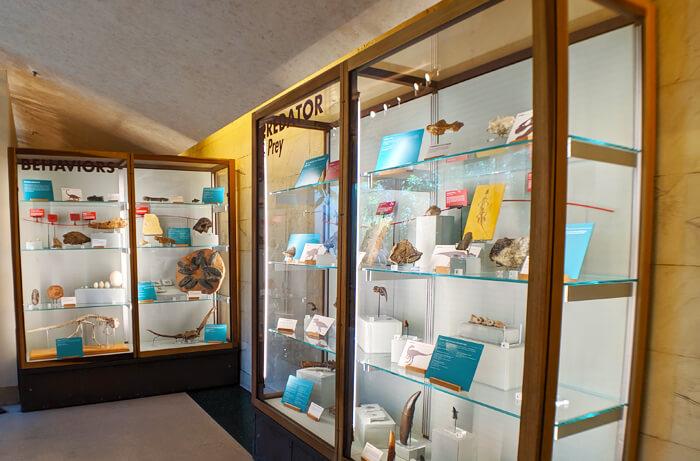 Institute Museum